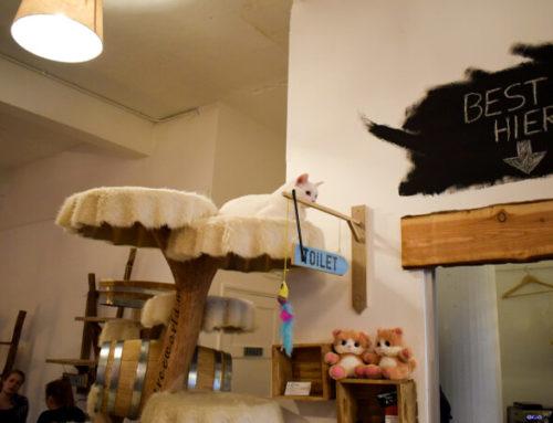 PEBBLES KITTY CAT CAFÉ ROTTERDAM: TAARTJES, THEE ÉN SNOEZELIGE POESJES