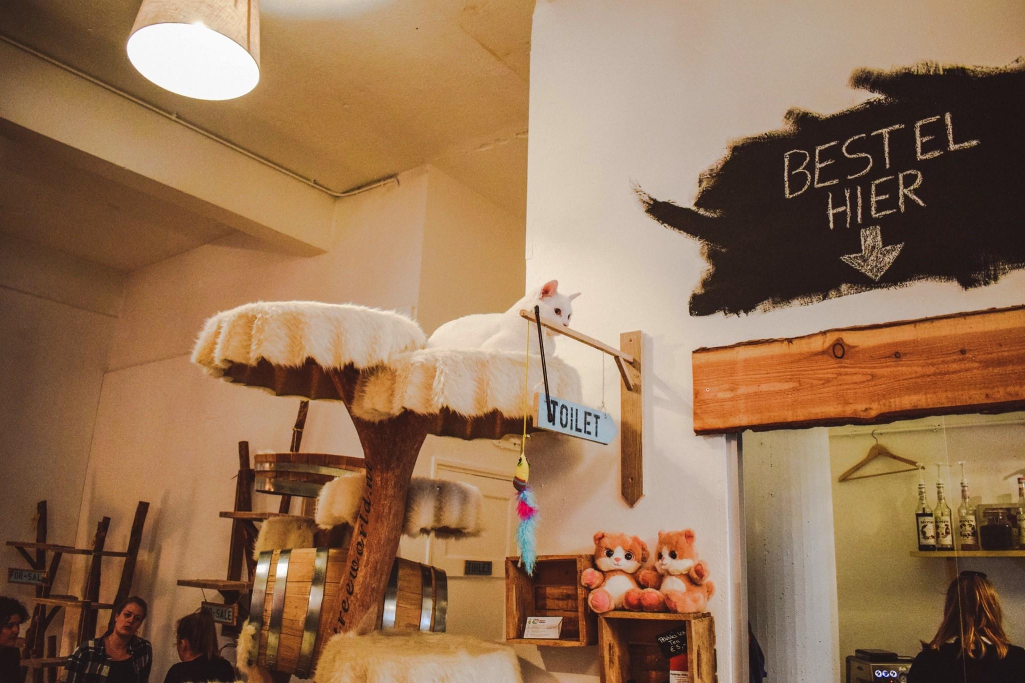 PEBBLES KITTY CAT CAFÉ ROTTERDAM: KATTENCAFÉ MET TAARTJES EN THEE
