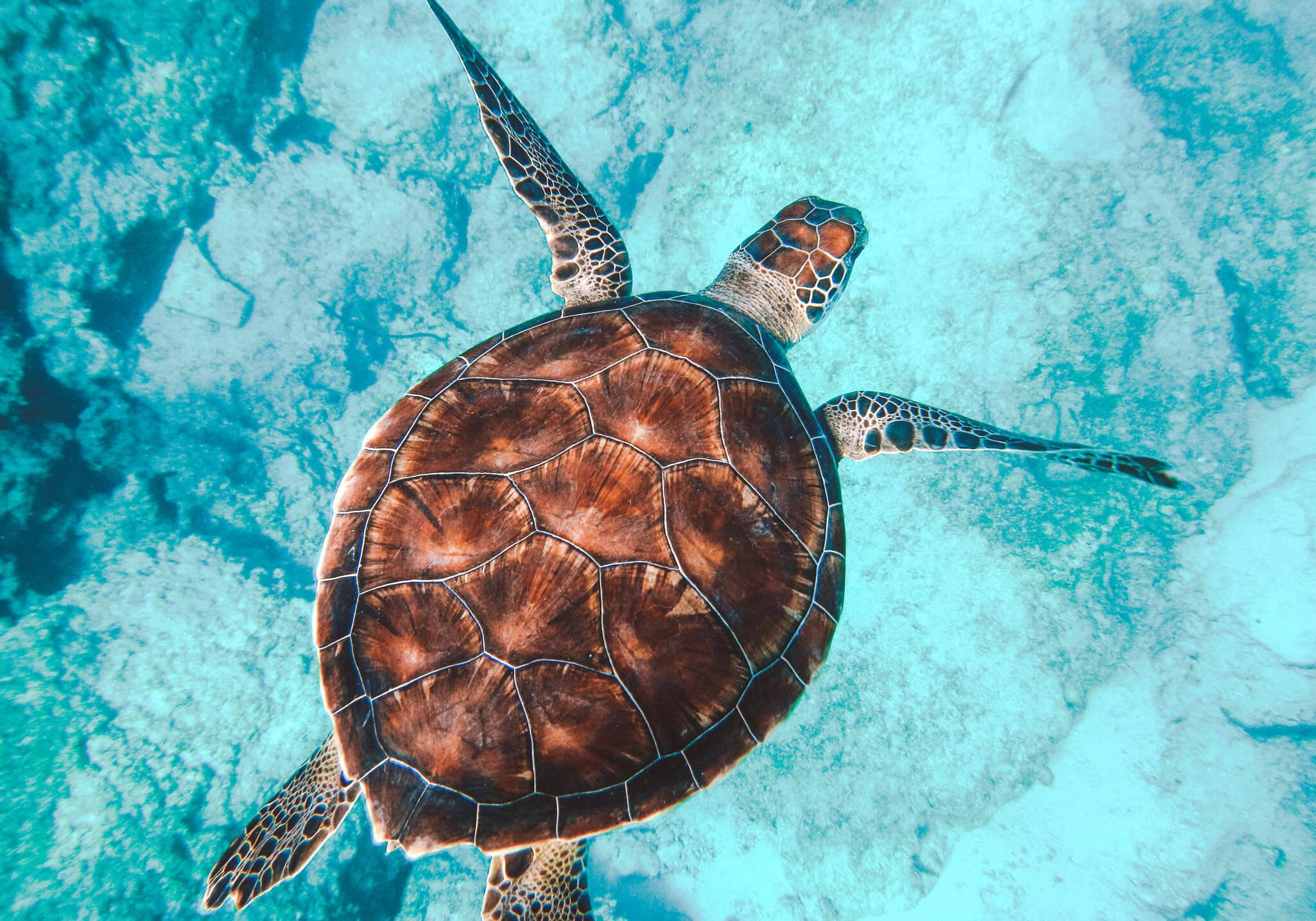 COSTA RICA Travel Guide | Hotspotjes